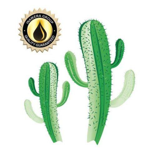 Inawera Cactus